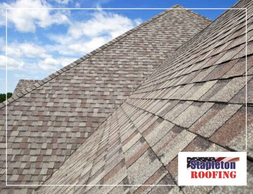 Eliminating Infestation: Ways to Spot Dry Rot on Your Roof